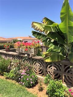 Jardín trasero