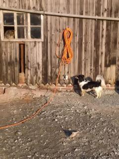 Hofhund und Katze