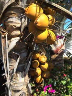 L'Oasis de Terre Rouge - Appartement Acacias - Cocotiers