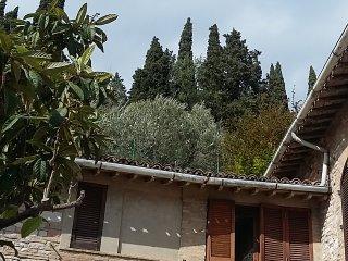 La Tana del Gatto, Assisi