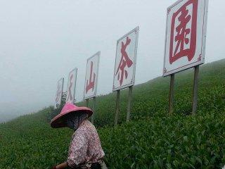 新天山阿里山茶業民宿  Tea Homestay