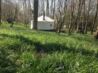 Luxury Yurt Tetreat in Sussex Woodland, Halland