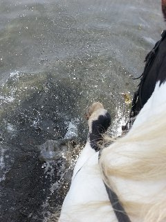 In the sea with Domino having a good splash!