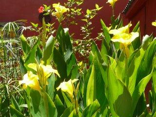 Rare! Riad de charme avec jardin dans la médina, Essaouira