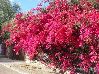 Villa Bouganvillea  sea view, garden, Wi-Fi free