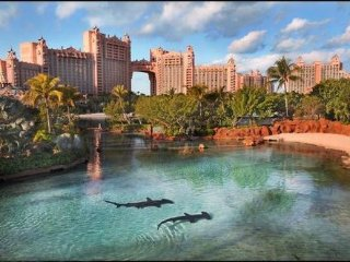 Affordable 1 Bed /1 Bath, Steps Away from Atlantis, Paradise Island