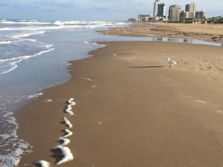Beachfront Blessed!, Ilha de South Padre