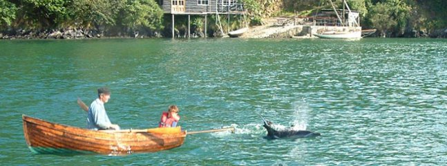 dolphins of Tremerlin quay