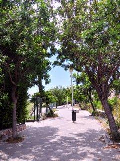 Paseo de acceso a playa Robinson