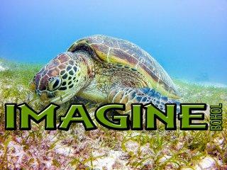 DIANA 1 - IMAGINE-BOHOL, Panglao Island