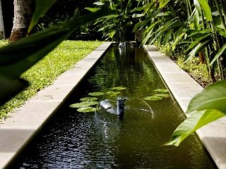 Lotus pool in your private tropical garden