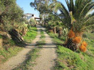 L'Agave e la Palma nana, Ribera