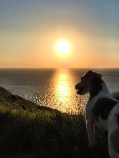 There are so many walks around Widemouth Bay, its just stunning with the sea on the door step.