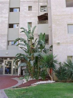 The Building