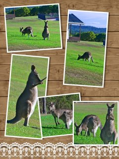 Some of the locals!!
