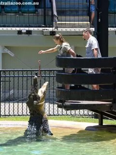 Australia Zoo the home of the Crocodile hunter a day day out.  You can drive there or get a bus.
