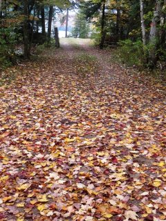 Driveway in the fall.