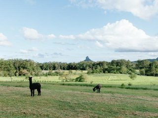 Blackwattle Farm B&B and Farm Stay, Beerwah