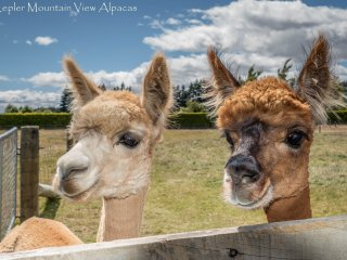 Alpaca Farmstay -  Kepler Mountain View Cottage, Manapouri, Fiordland