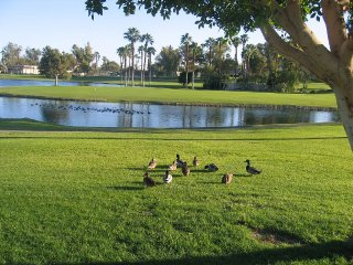 Oasis Townhome - 18th Fairway, Lake & Country Club, Palm Desert