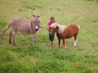 Gîte dans Mas, idéal enfant avec âne et poney, Saint-Bres