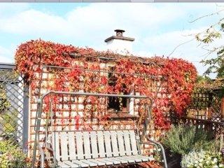 Killarney's Secret Garden
