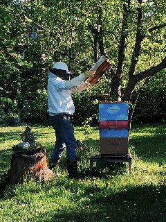 Checking in on the bees - guests are welcome to don a spare beesuit and go in, depending.