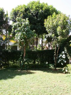 Garden at back of the house; secured perimeter wall for property; view into neighbors garden