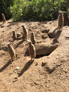 Newquay Zoo - worth a visit.  Children loved the Meerkats