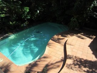 Mosman 4 Bed House Pool