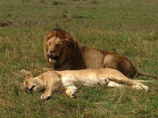 Bienvenido kenya tours and safaris