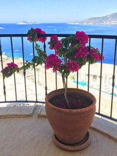 Baugainvillea on terrace entrance floor, fabulous views of Kalkan Bay with islands