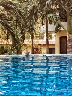 Tropical palms in the pool & courtyard area, imagine sipping a refreshing drink poolside?