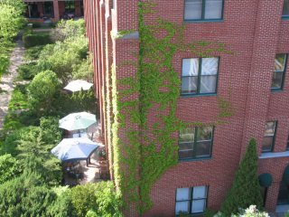 SUNNY, TRANQUIL CONDO STEPS FROM ATWATER MARKET, Montreal