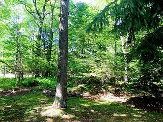 Woods Surrounding Pocono Lake Vacation Home