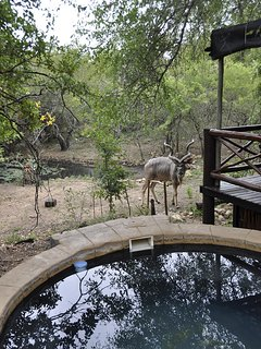 watering hole off elevated deck