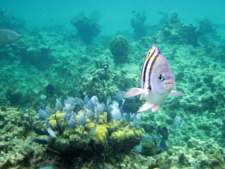 Great snorkeling and scuba diving