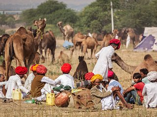 Pushkar Camel fair tour 2016