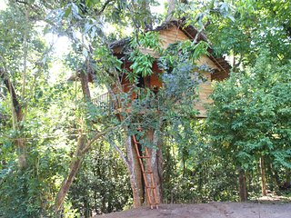 Tree House - Midigama