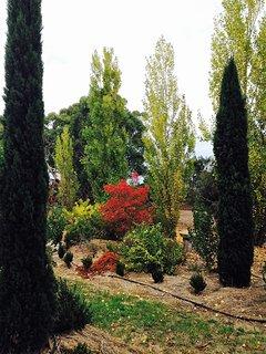 View through pencil pines