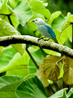 beautiful tropical tanagers of all types.