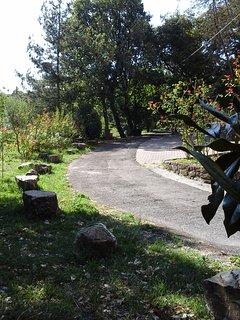 Parte bassa vialetto e giardino