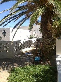 backyard - palm tree and swing relaxation spot