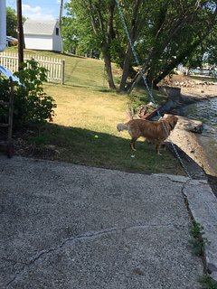 Dogs like this place because they can be on a leash (provided) and be in the yard,water,beach,ordock