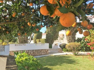 Citrus garden outside the Pool apartment.