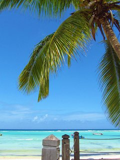 Blue sky, swaying palm trees, turquoise carribean sea