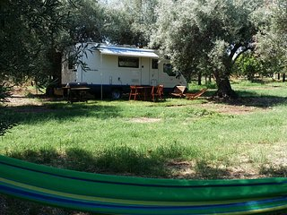 Autocaravan in olive tree grove, Noto