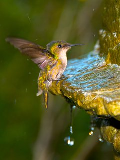 Hummingbirds love the ever-flowing water globe