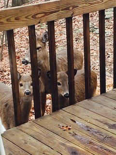 Our friendly visitors.
