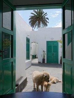 Vista desde la cocina con gato y perro educados. Se quedan en el patio y quidan a uno.